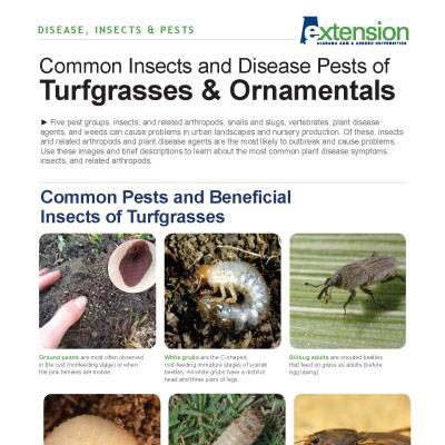 Common Insect and Disease Pests of Turfgrasses and Ornamentals
