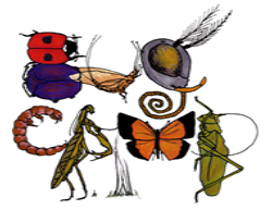Little Explorers Mini Camp: All About Bugs! - July 20-22, 2020